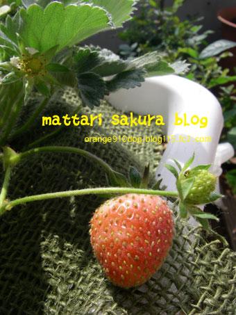 ichigo_20080413020024.jpg