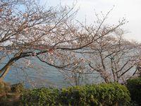 いちご桜2