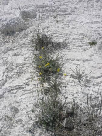 yellowstone4-3.jpg