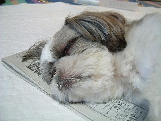 睡眠学習~