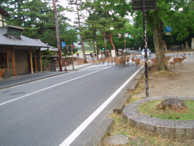 20080721-2 028