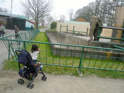 帯広動物園ぞう1