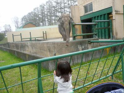 帯広動物園ぞう2