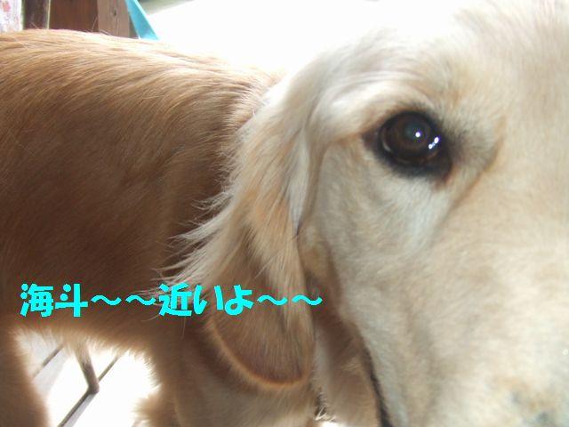 041_20080624222739.jpg