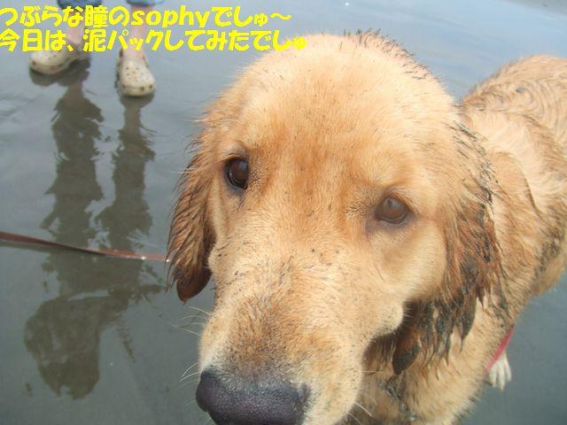 041_20080703233417.jpg