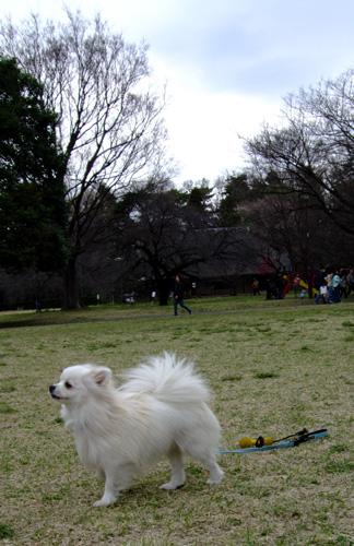2008hanami1.jpg