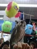 2008tanabata-owl.jpg