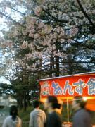 08hanami002.jpg