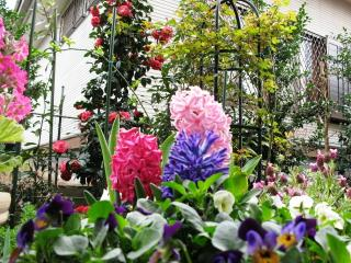 ツボ庭は花盛り