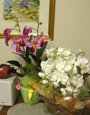 カトレアと胡蝶蘭の