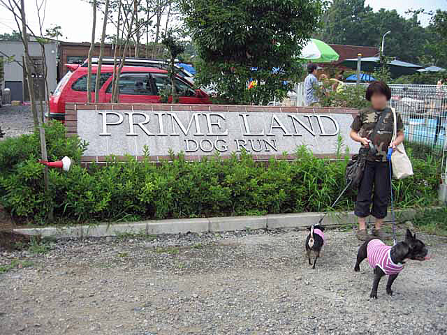 prime land  (3)