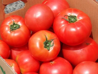 bruschetta pomodori2