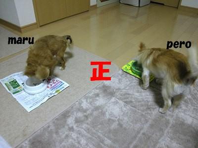 写メ 1114