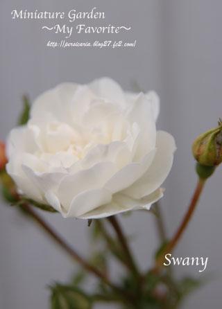 Swany.jpg