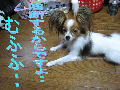 IMG_3200.jpg