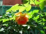 PICT0003_convert_20080507153402.jpg