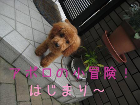 IMG_4377のコピー