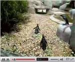 蝶とペンギンの可愛い動画