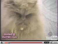 猫ハンプニング集2!!