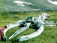 これが史上最大の生物の骨!