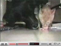 猫と犬が一緒に食事をすると、こうなります。