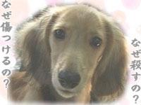 多摩センター動物公訴を応援する