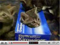 ティッシュの箱も子猫にとっては大切な遊び場