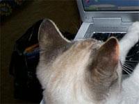 この猫ちゃんは何をしていたのか見る?