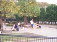 この画像は駒沢オリンピック公園ドッグランです。