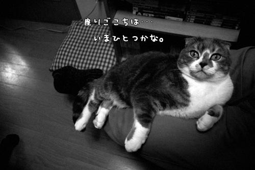 20080416__a