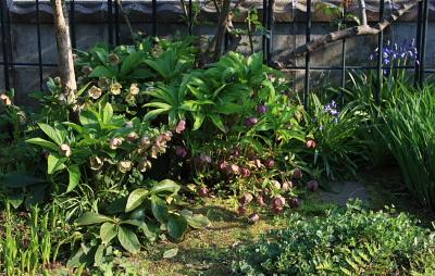garden604