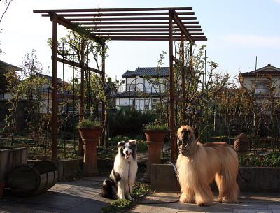 garden700