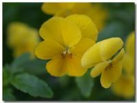 黄色-1-
