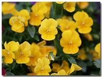 黄色-2-