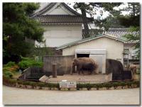 小田原城から見える象-1-