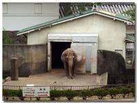小田原城から見える象-2-