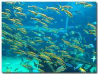 魚群-2-
