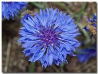 青い花-1-