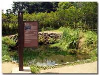 銚子池-1-