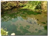 銚子池-2-