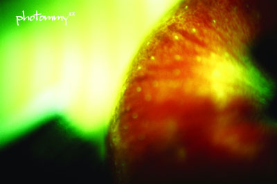 りんご042901