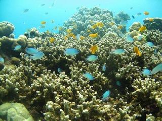 タイ プーケット 体験ダイビング 雨季