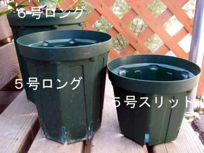 pot02.jpg