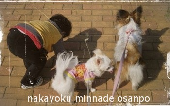 仲良くお散歩
