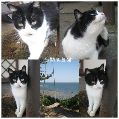 日間賀島猫