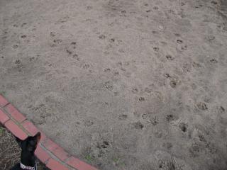 砂場でアート?