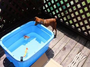 お水の温度はOK?
