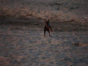 砂浜を走るnana