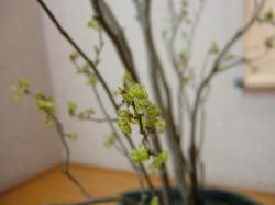 和室のお花_アップ