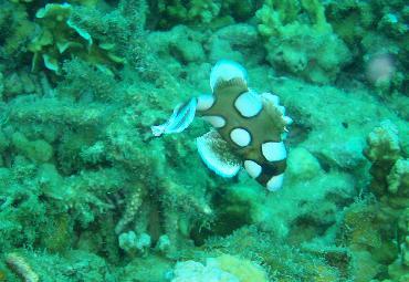 タイ|タオ島|海|ダイビング|魚